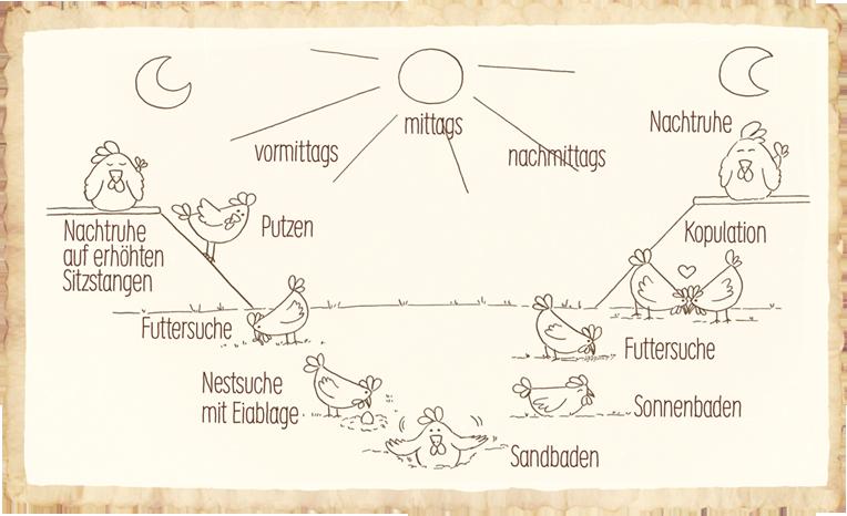 Tagesablauf von einem Huhn