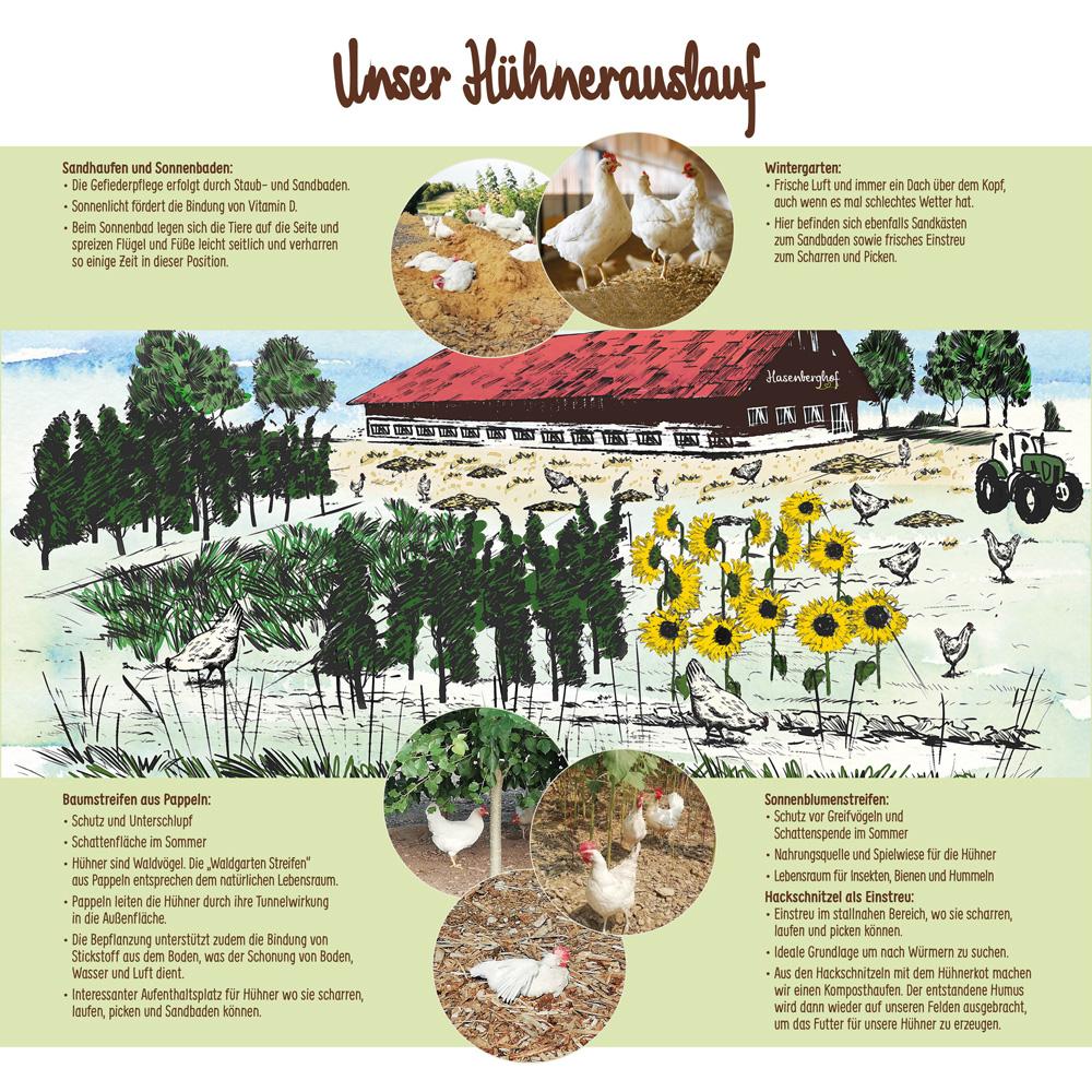 Hasenberghof Waldgarten Hühner Übersicht